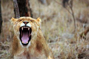 gestion des emotions : la colère