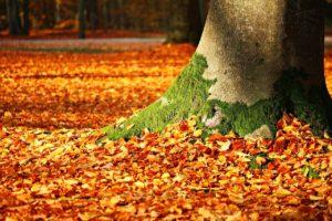 automne préparer le renouveau